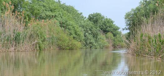Растительность по берегам рек в Дельте