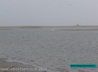 раскаты,лебеди,Астрахань