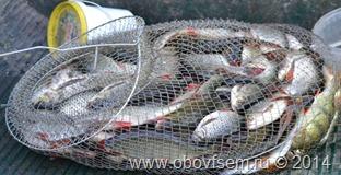краснопёрка улов